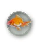 Prekės žuvims