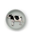 Karvėms